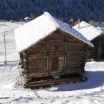 Mayen à Olivier à La Forclaz, Valais suisse
